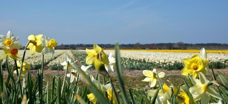 Gekkenwerk . . .  - SCHAGERVLOTBRUG - . . .zeggen ze, om met windkracht 5 bloemen te fotograferen.!<br /> Ja je bent er dan één keer en wilt ook wat