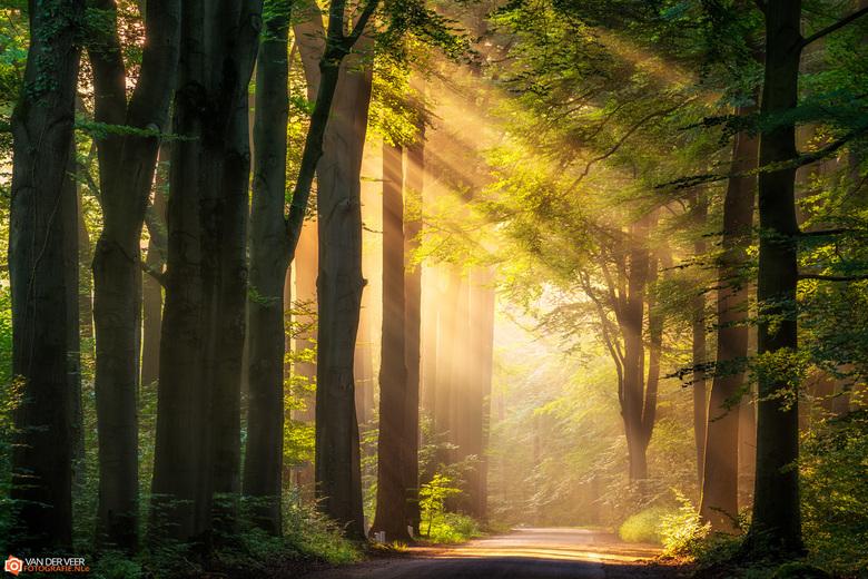 """Sunray path - Op een mooie september ochtend heb je grote kans op deze prachtige show.<br /> <br /> Groeten Frederik<br /> Volg <a href=""""http://www"""