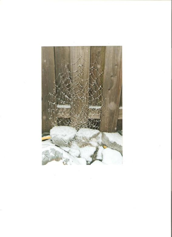 web in de sneeuw -