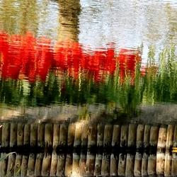 De natuur maakt zijn eigen schilderijtje...