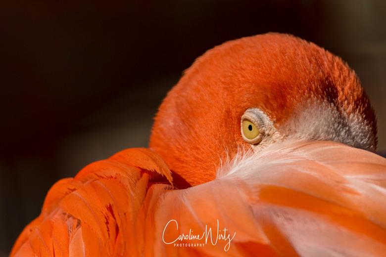 Oog in oog met een flamingo