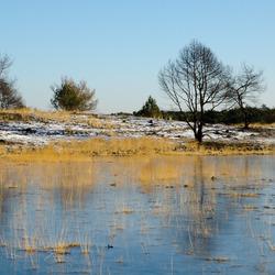 Winterlandschap Kalmthoutse heide 2