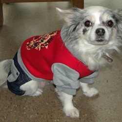 Mijn Chihuahua Lisa in haar nieuwe outfit tijdens een dierenbezoek.