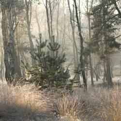 Winterpenseel.