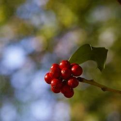 mooi rood