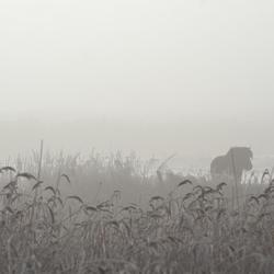 paardje in de mist