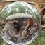 paddenstoel gevangen in mijn bol