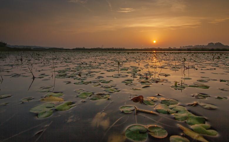 """Sunrise Lily Pads - Het heeft iets erg vreemds en bevrijdends om in de hele vroege ochtend ergens in een meer te staan fotograferen <img  src=""""/images"""