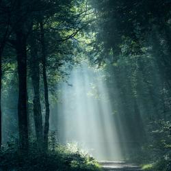 Woodland Mystery.
