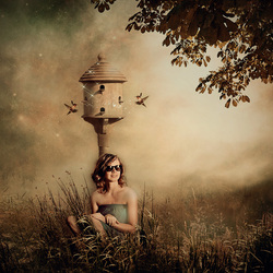 Bird House ...