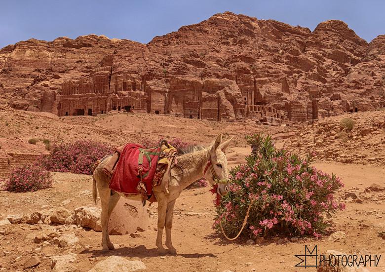Donkey Ride - Gemaakt in de kloof van de heuvels bij Petra in Jordanië.