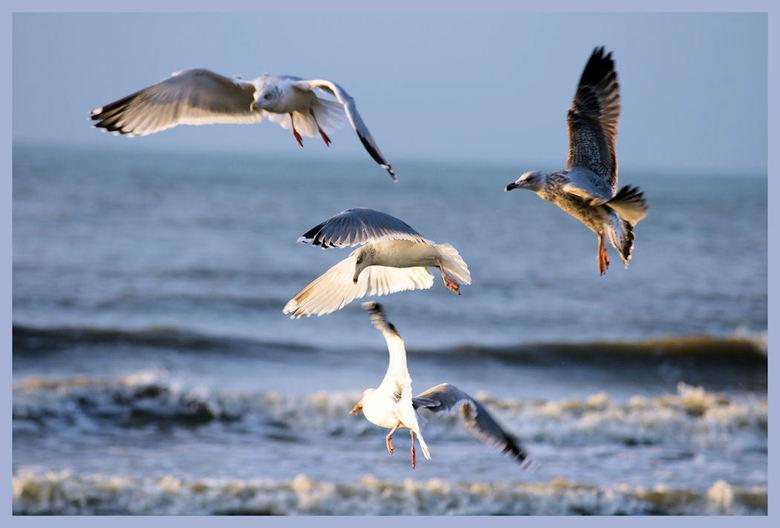 Meeuwen - Deze foto's is gemaakt op het strand van Katwijk.