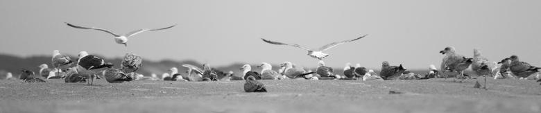 Strandgangers -