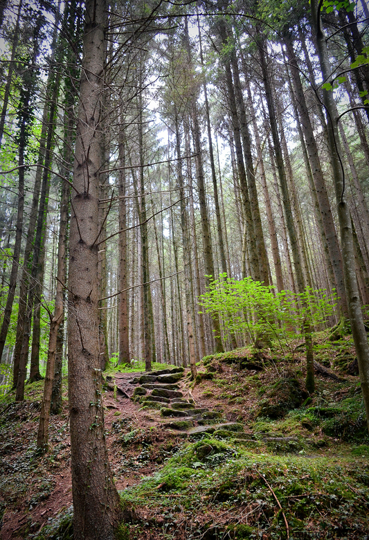 Forest path -