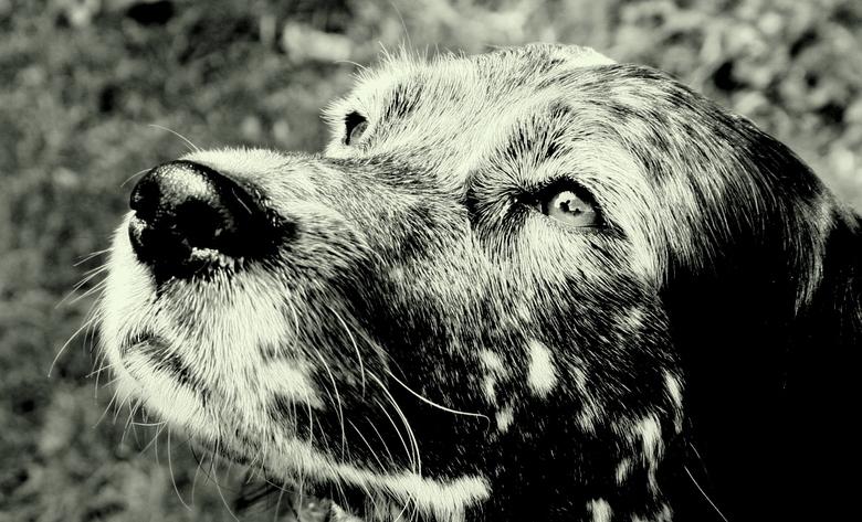 hond kijkt naar baas - de toewijding waarmee deze hond naar zijn baas kijkt, vond ik erg sprekend.<br /> <br /> volledige aandacht, de baas zelf is