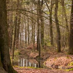 Het bos bij Making