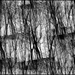 Door de bomen het bos niet meer zien....