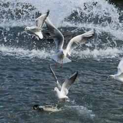 Spektakel in het water