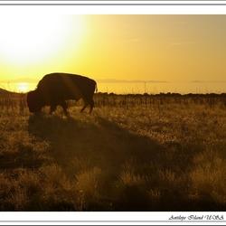 Antilope Island