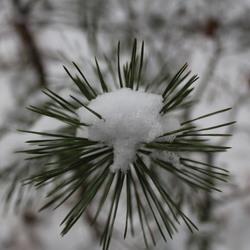 Sneeuw warmte