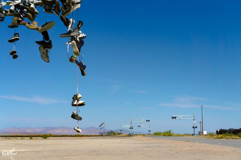 Shoe tree Mojave desert - Een shoe tree, ergens midden in de Mojave desert