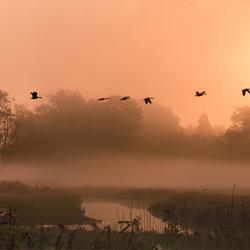 Mistige morgen in Bourgoyen