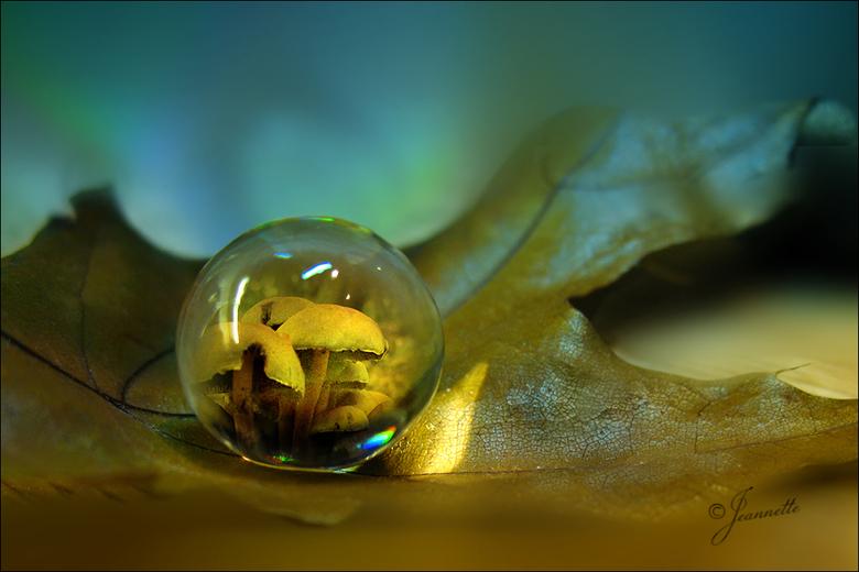 """just fantasy......... - Herfst in een drup en het noorderlicht op de achtergrond........just fantasy!<img  src=""""/images/smileys/wilt.png""""/><br /> <br"""