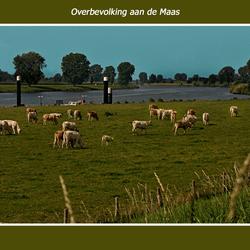 Overbevolking aan de Maas