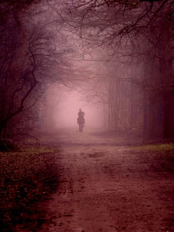 Paard in de mist - een leuke ochtendwandeling op een paard in de mist