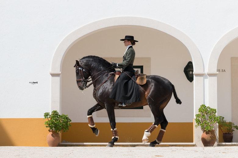 Spaanse paarden portugal