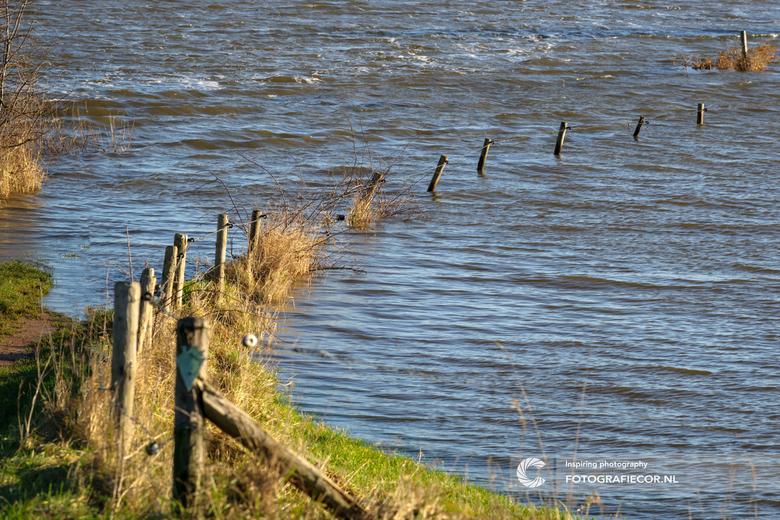 The end of the road - Een bijzonder schouwspel als het hoge water bezit neemt van de uiterwaarden in het Hollandse rivierengebied. Raken ze in andere