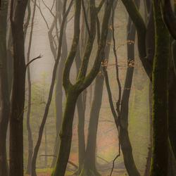De ochtend ontwaakt in het bos