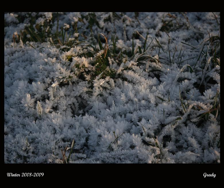 ijsgras - Deze foto heb ik ook vorig jaar gemaakt,winter 2008/2009.<br /> Bedankt voor al jullie fijne reacties en commentaren op mijn vorige uploads