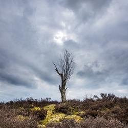 Tree Balloerveld