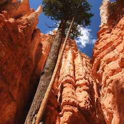 Bryce Canyon, USA hiking Navajo Trail