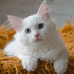cattery's nieuwste kitten