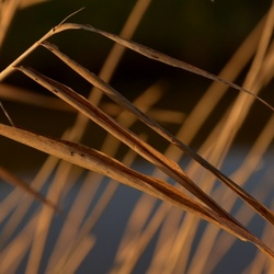 Abstract riet