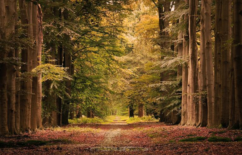 Herfst in Lochem