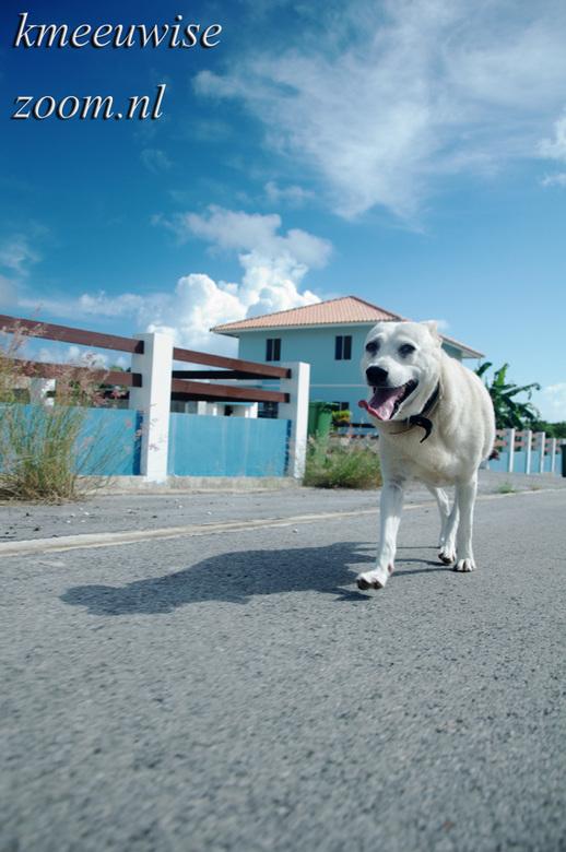 candy`s vieuw - tijdens deze foto rapportage was ik onze hond aan het uitlaten had ik een ander perspectief gekozen. <br /> <br /> De camera hield i