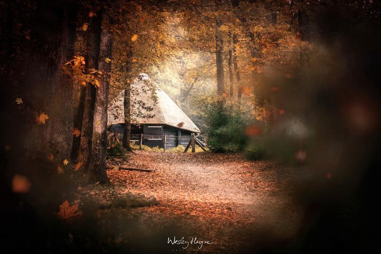Through the Leaves - Herfst bij schaapskooi Hoog Buurlo