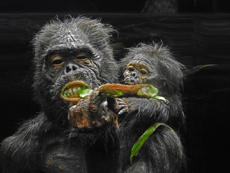Prehistorische apen