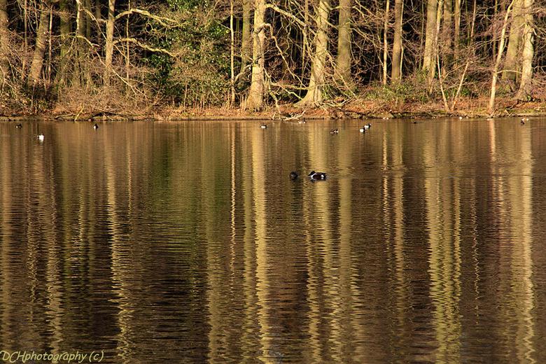 Reflections - De bomen werden zo meer weerspiegeld in het water en door de stroming leken ze te dansen. <br /> <br /> Iedereen bedankt voor de fijne