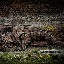 De Muur, de Kat en de Rat