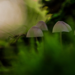 Mysterious green with Mushrooms