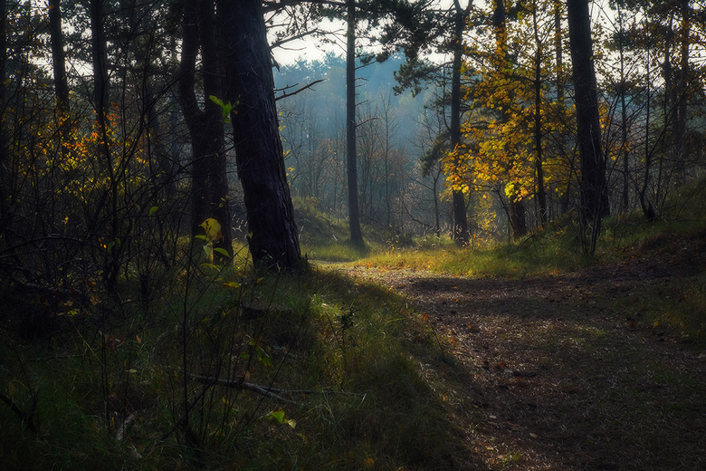 Bospad - Ook zo genoten van de herfst?