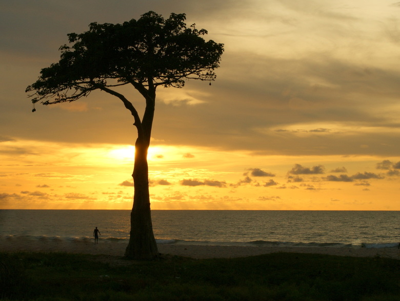 Big tree, little man. - Gambia.