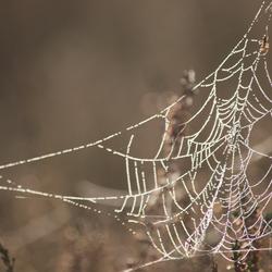 Het huis van meneer spin