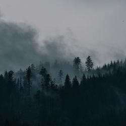Mistige bossen