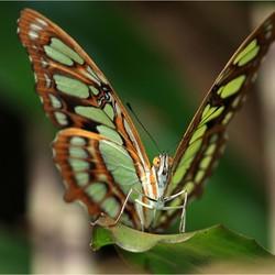 Vlinder* 2  Blijdorp