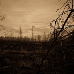 Strabrechtse Heide in de morgen